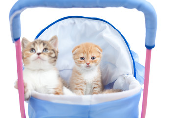 sweet kittens in baby carriage