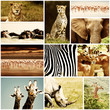 African Animals Safari Collage