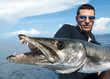Gros plan sur la tête et les dents du barracuda