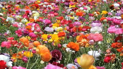Blooming petals