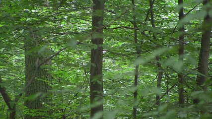 Zoom into a forest to imaginary light
