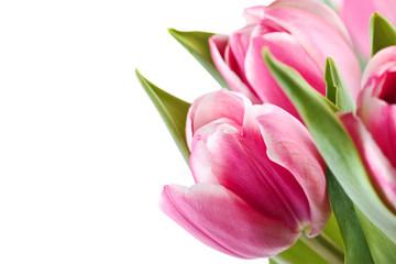 Bouquet of tulips