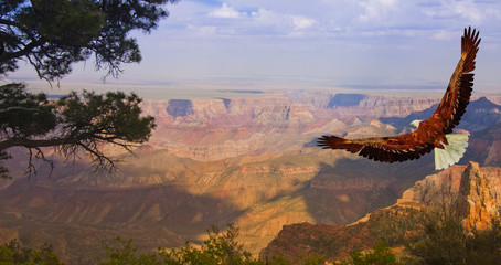 Eagle takes flight over Grand Canyon USA