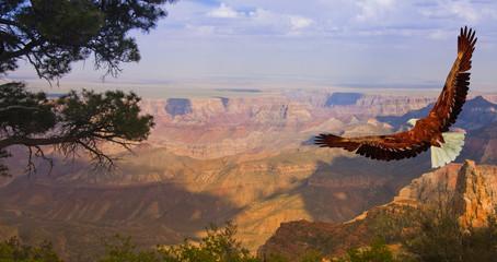 Orzeł ma Lot nad Grand Canyon, Stany Zjednoczone Ameryki