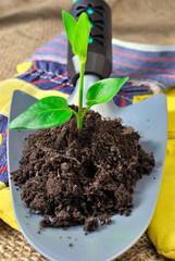 Germoglio e terriccio su paletta da giardinaggio