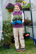 Gardening - girl with lavenders seedlings in greenhouse