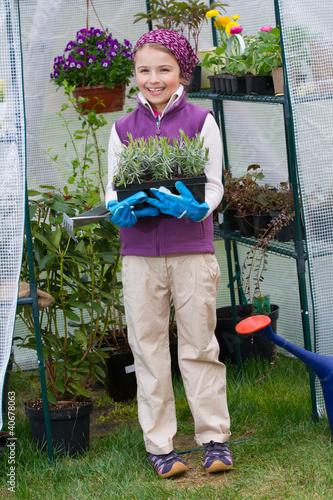 Gardening - girl with lavenders seedlings in greenhouse