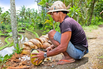 Man is opening tropical green coconut for the drinking
