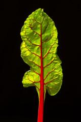 Foglia di Bietola rossa 4