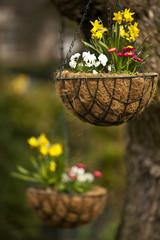 Frühlingsgrüsse 2012