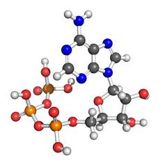 Adenosine triphosphate structure