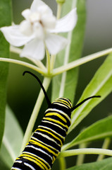 Wildlife and Animals - Caterpillars