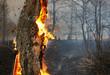 Burning tree - 40697858