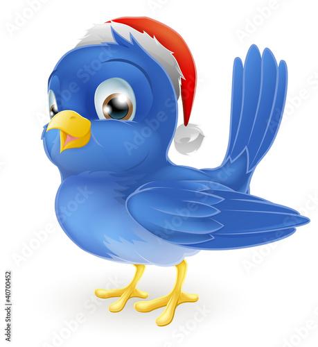Blue bird in Santa Claus hat