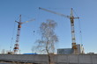 Birch and two cranes at the construction site.