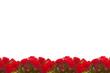 rosen,hintergrund
