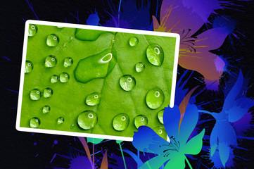 green leaf photoframe