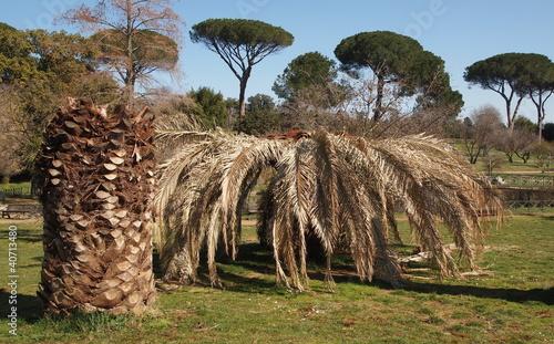 Aluminium Palm boom PALMA ASSALITA DA PUNTERUOLO ROSSO N°2