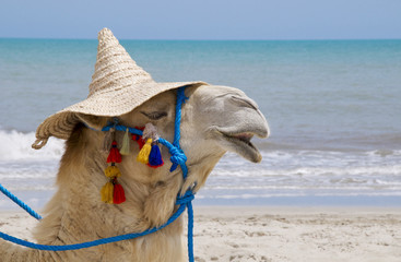 Kamel mit Hut