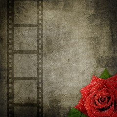 Film stripe and rose on  textured   background