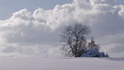 Snowfield and tree,in Biei,Hokkaido,Japan