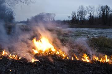 Fire in meadow