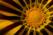 flower[rudbeckia]_02