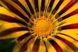 flower[rudbeckia]_03