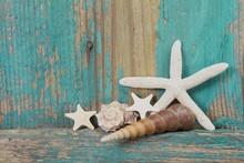 Jetsam - coquillages et étoiles de mer