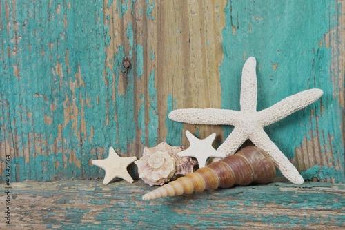 Strandgut - Muscheln und Seestern