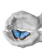 farfalla tra le mani