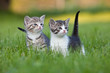 two young cute kittens in garden grass
