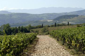 Sentiero in collina