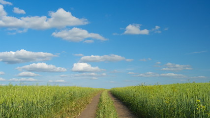 Dirt road in the green wheat field, summer day, timelapse.