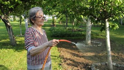 Senior Woman watering strawberries in a Garden
