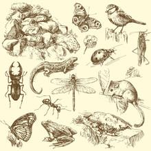 Zwierzęta, ogród