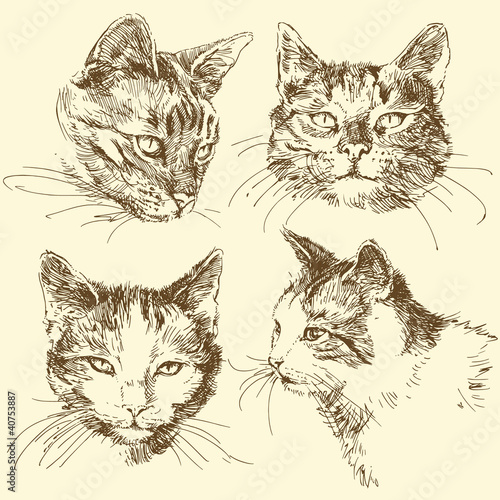 kitten, cat - hand drawn set