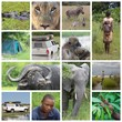 African landscape, people and animals