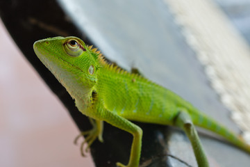 Lizard on the back of a chair
