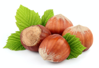 Hazelnuts with leafs