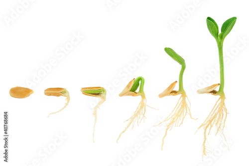 Leinwanddruck Bild Sequence of pumpkin plant growing isolated, evolution concept
