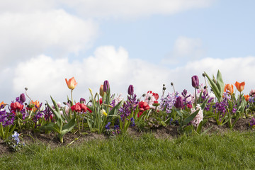 Border of different spring flowers and grass