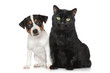 Portrait of a Dog and cat on white background