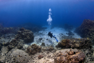 Lone Scuba Diver on a mission