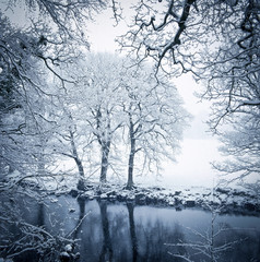 Trees and still lake in snowy landscape