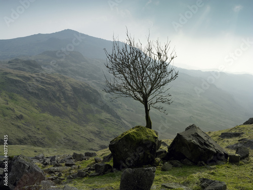 Tree growing in rocky rural landscape
