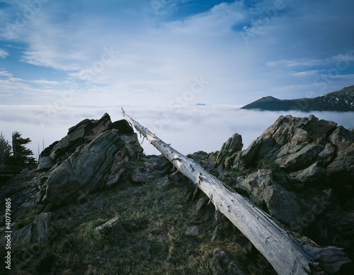 Bare log stretching over rocky cliff