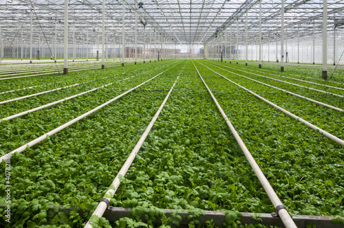 Modern Dutch greenhouse complex with many small plants