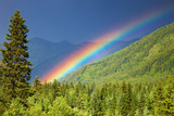 Fototapety Rainbow over forest