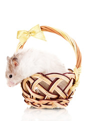 Cute hamster in basket isolated white
